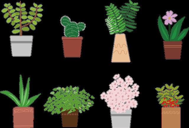 jardinerie, jardinerie en ligne, plante, plante intérieur
